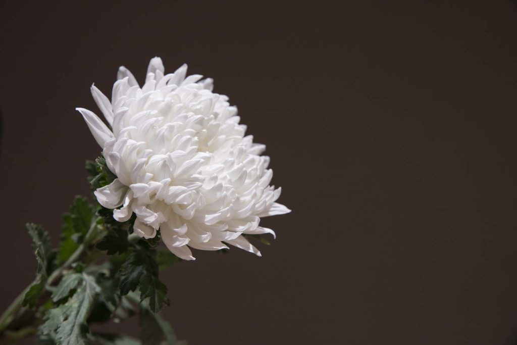 sprowadzanie zwłok z zagranicy finansowanie -kwiat